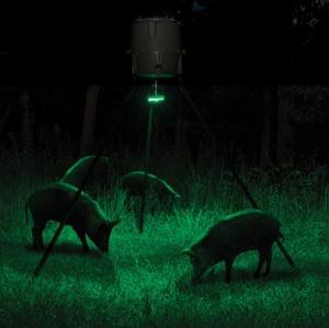 Åtelbelysning vildsvin