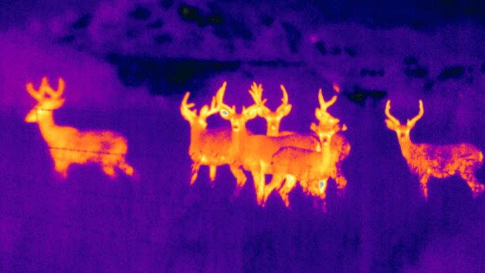 Bäst värmekamera test